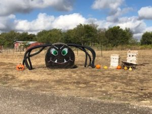 halloween spider made from hay bale in the ground at country oasis rv park in texas